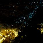 Green_Glow_Caves_in_New_Zealand_(6563152219).jpg